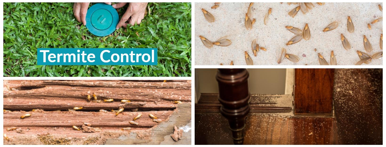 Termite Treatment Palm Beach | Termite Control | Island